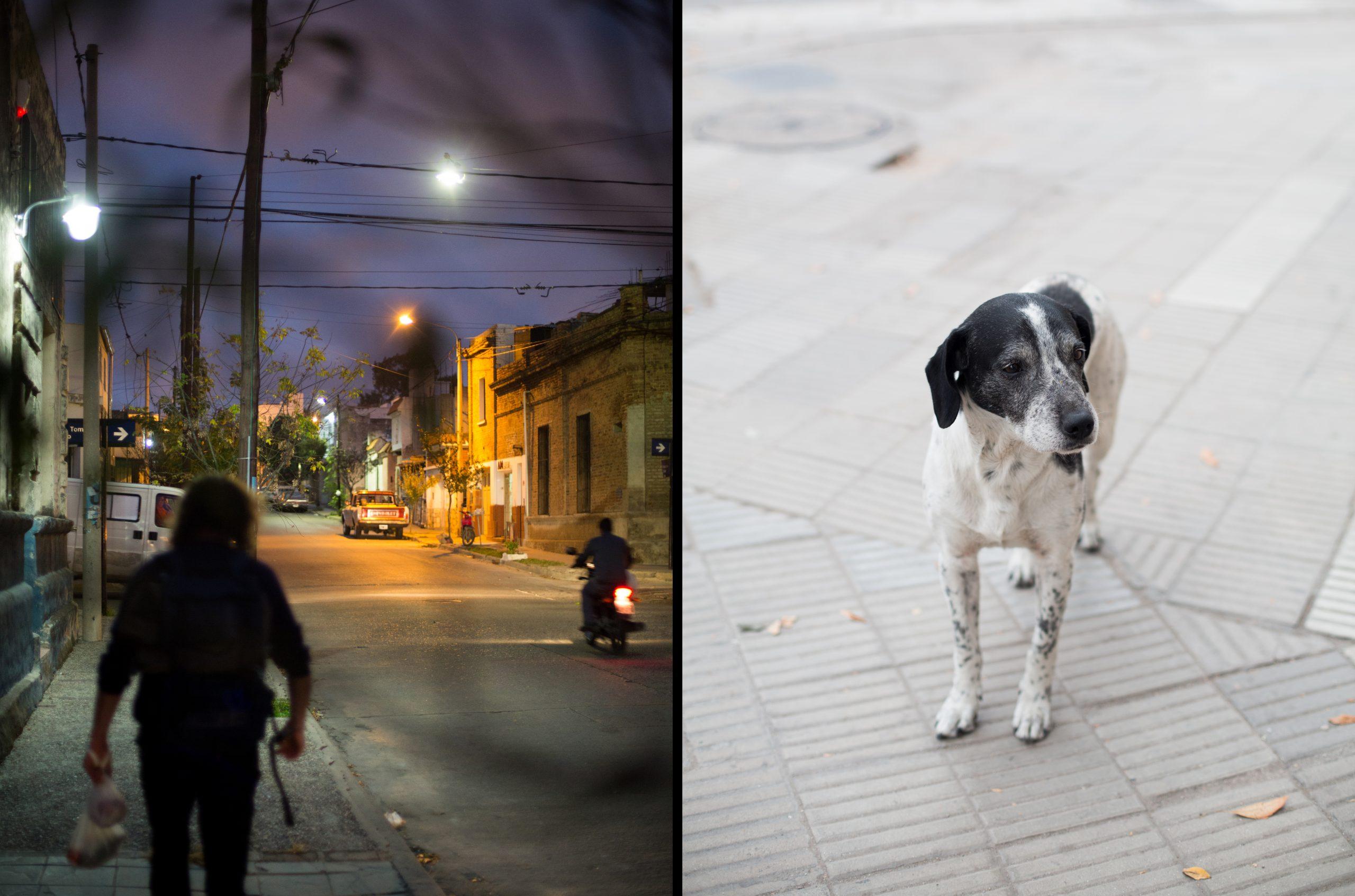 016_05_streetdog