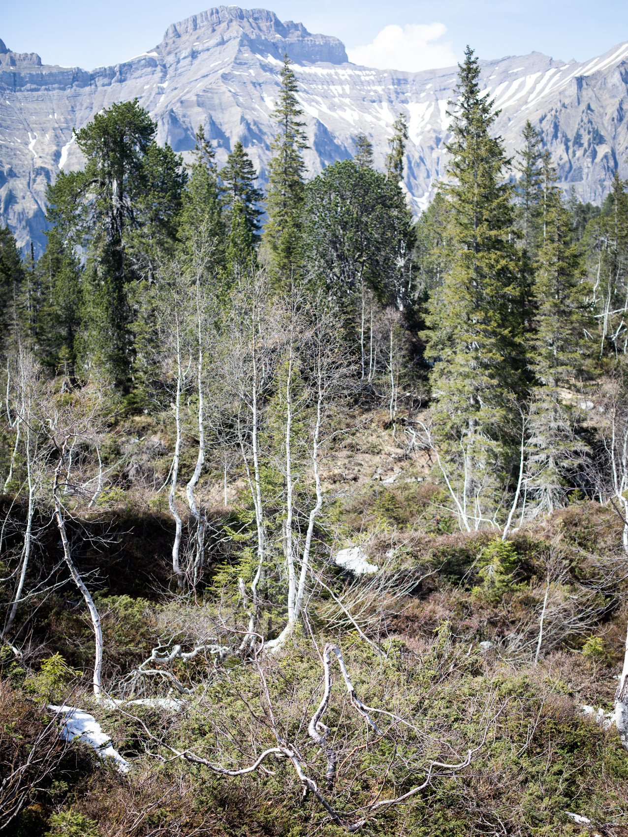 Pragelpass Wald